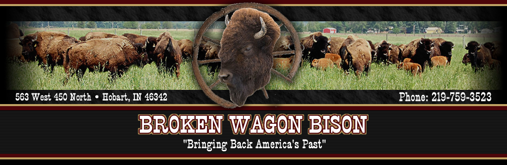 BROKEN WAGON BISON